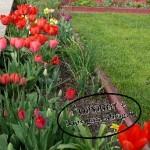 Blumenzwiebel Herbstpflanzung - Was blüht noch?