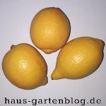 Aus einem Kern ein Zitronenbäumchen ziehen, ist ganz leicht