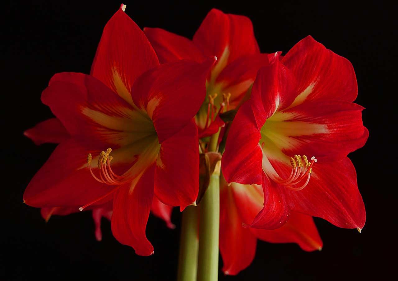 Die Perfekte Blume Für Den Winter: Pflege Und