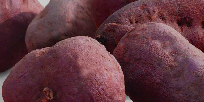 Anbau von Süßkartoffeln im eigenen Garten