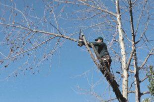 Bäume sicher beschneiden - So pflegen Sie den Baum risikolos