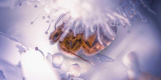 Bienenweiden im eigenen Garten - Schaffen Sie eine kleine Bienen-Oase