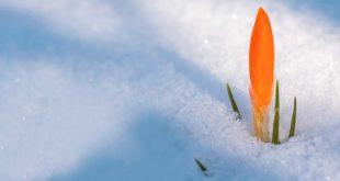 Blumenzwiebeln vor dem ersten Frost pflanzen - Tipps und Tricks