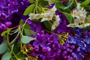 Blumenzwiebeln - Was daraus entstanden ist