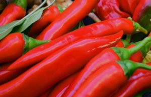 Chili selber anbauen