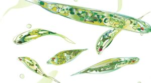 Effektive Mikroorganismen für effiziente Gartenarbeit