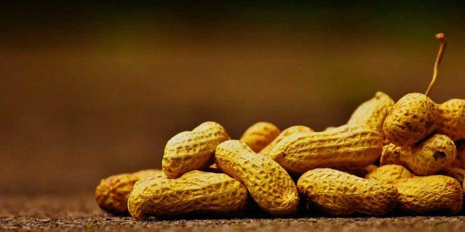 Erdnussplantage
