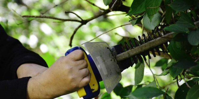 Gartengeräte richtig überwintern - Die richtige Lagerung