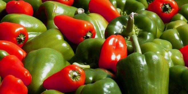 Paprika anbauen - Pflanze ziehen und vermehren
