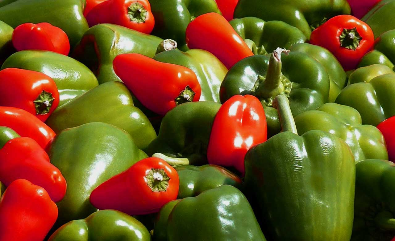 paprika anbauen paprika pflanzen selber ziehen und vermehren. Black Bedroom Furniture Sets. Home Design Ideas