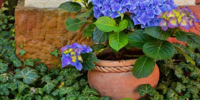 Pflanzenkübel für Wohnraum - Eine einfach dekorative Idee