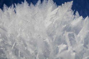 Winter im Garten - Was Sie mit ihrem Garten während der kalten Zeit machen können