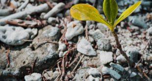 Zeit für die Bodenaufbereitung im März
